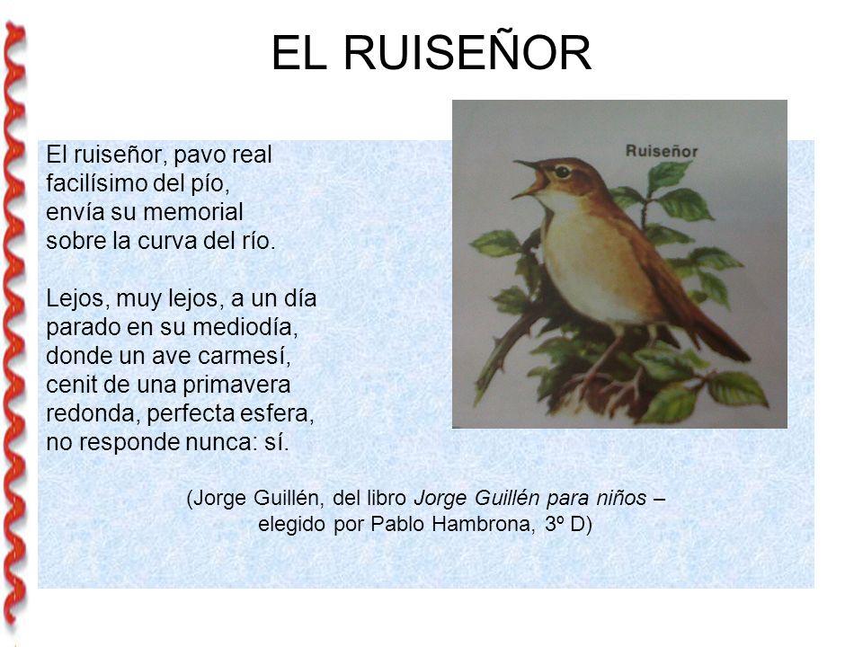 EL RUISEÑOR El ruiseñor, pavo real facilísimo del pío,