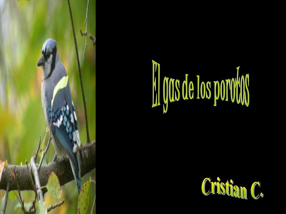 El gas de los porotos Cristian C.