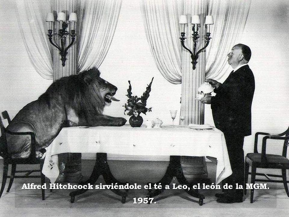 Alfred Hitchcock sirviéndole el té a Leo, el león de la MGM. 1957.