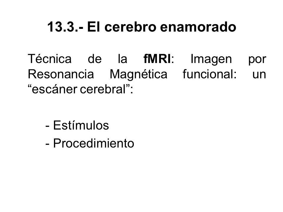 13.3.- El cerebro enamorado Técnica de la fMRI: Imagen por Resonancia Magnética funcional: un escáner cerebral :