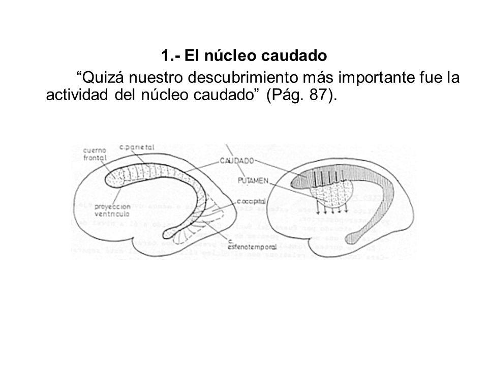 1.- El núcleo caudado Quizá nuestro descubrimiento más importante fue la actividad del núcleo caudado (Pág.