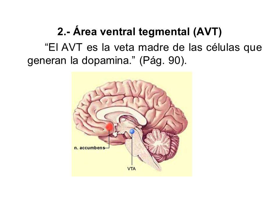 2.- Área ventral tegmental (AVT)