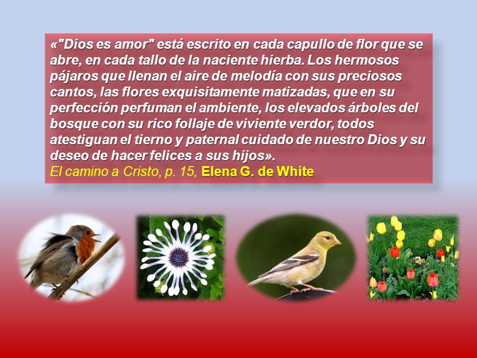 « Dios es amor está escrito en cada capullo de flor que se abre, en cada tallo de la naciente hierba. Los hermosos pájaros que llenan el aire de melodía con sus preciosos cantos, las flores exquisitamente matizadas, que en su perfección perfuman el ambiente, los elevados árboles del bosque con su rico follaje de viviente verdor, todos atestiguan el tierno y paternal cuidado de nuestro Dios y su deseo de hacer felices a sus hijos».