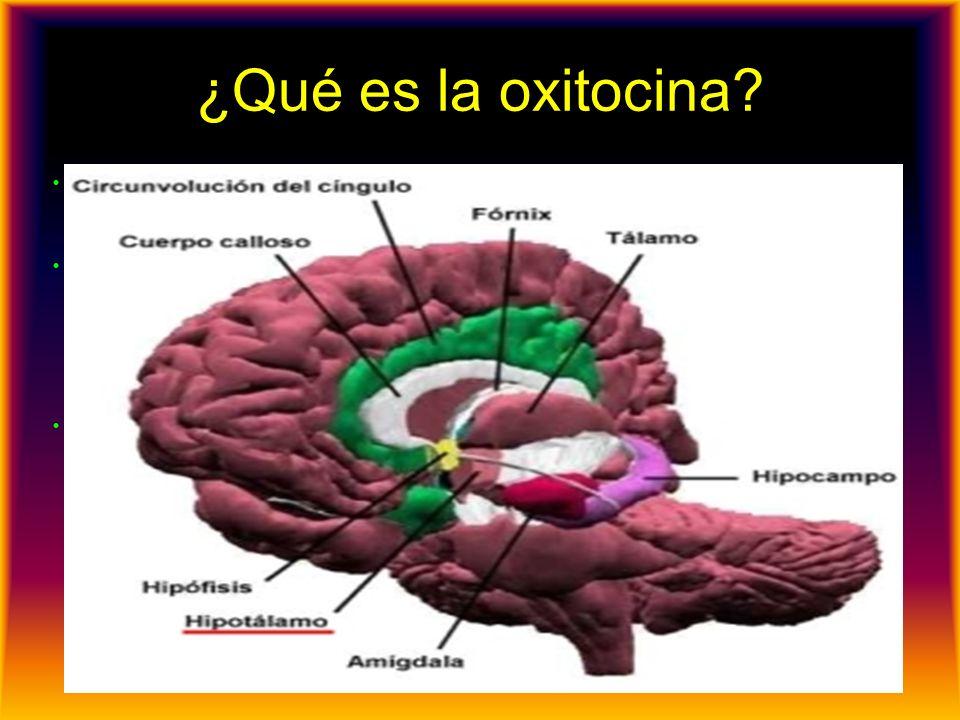 ¿Qué es la oxitocina