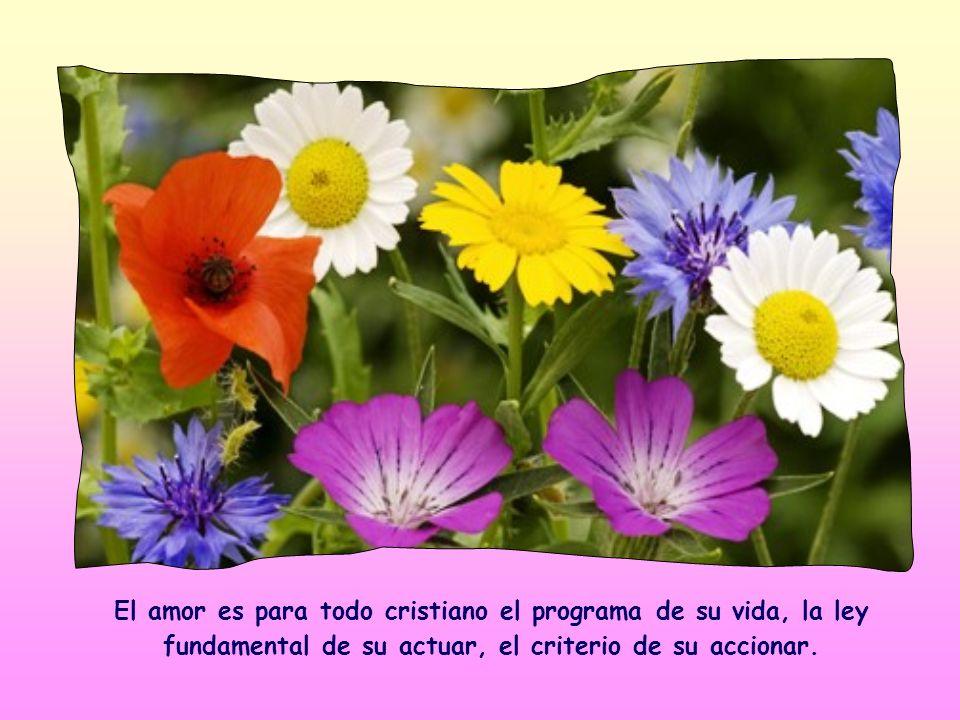 El amor es para todo cristiano el programa de su vida, la ley fundamental de su actuar, el criterio de su accionar.