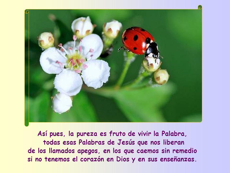 Así pues, la pureza es fruto de vivir la Palabra,