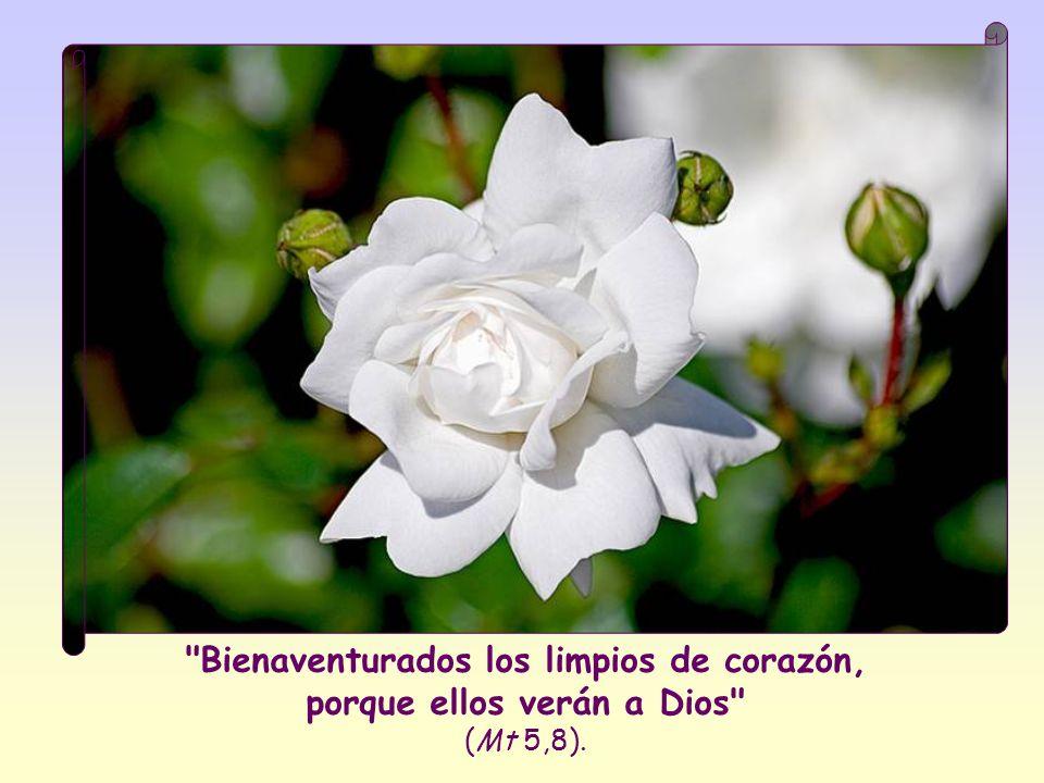 Bienaventurados los limpios de corazón, porque ellos verán a Dios (Mt 5,8).