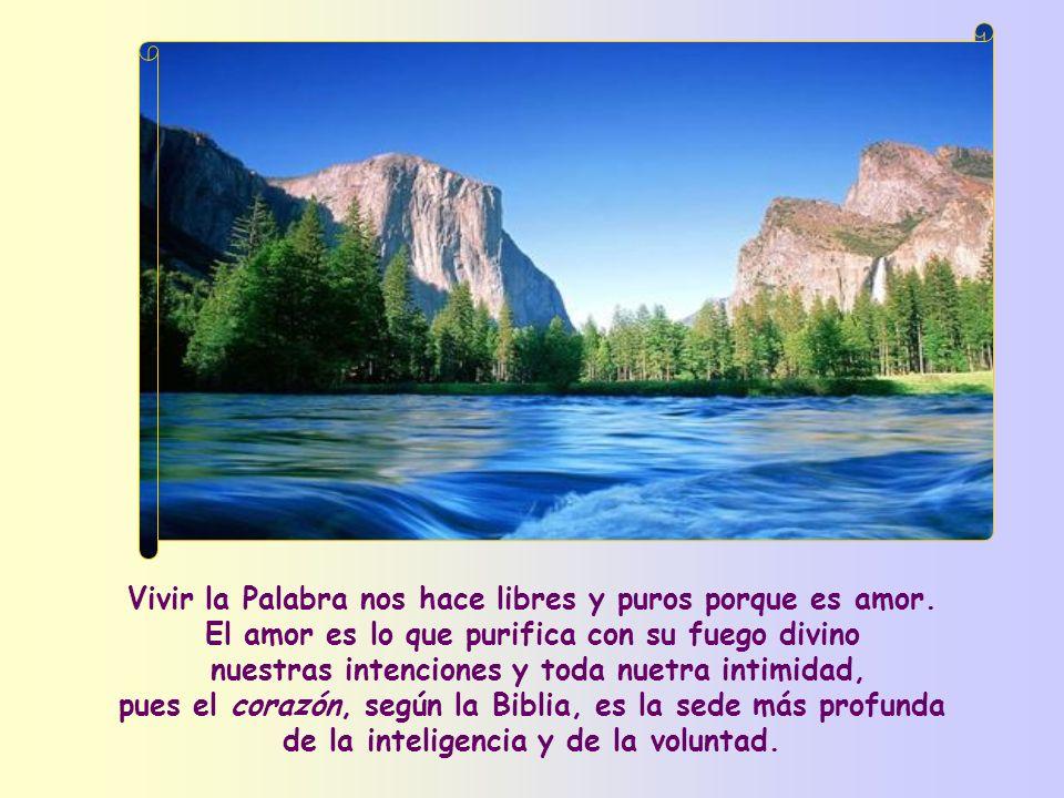 Vivir la Palabra nos hace libres y puros porque es amor