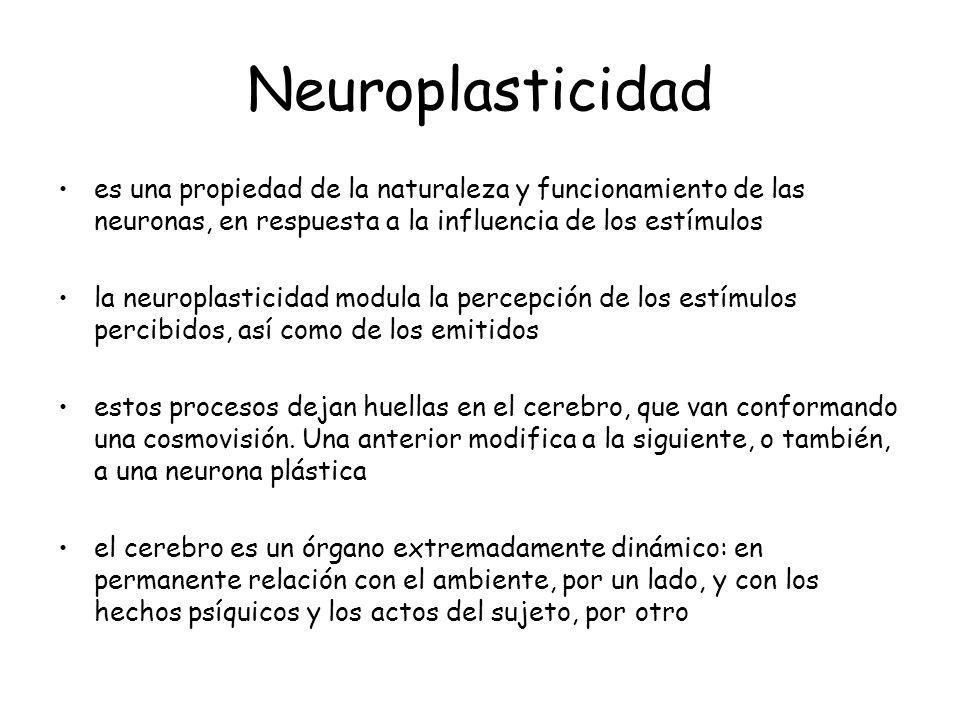 Neuroplasticidad es una propiedad de la naturaleza y funcionamiento de las neuronas, en respuesta a la influencia de los estímulos.