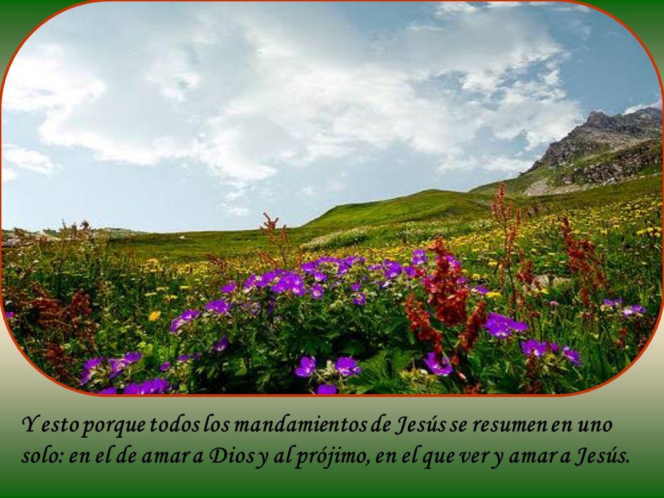 Y esto porque todos los mandamientos de Jesús se resumen en uno solo: en el de amar a Dios y al prójimo, en el que ver y amar a Jesús.