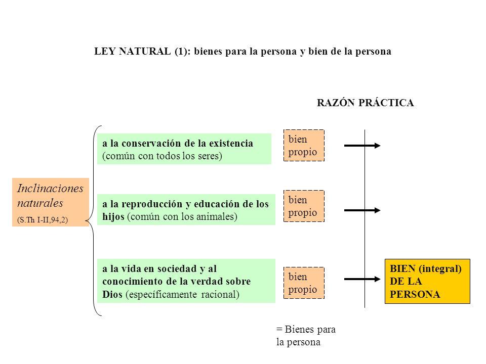 LEY NATURAL (1): bienes para la persona y bien de la persona