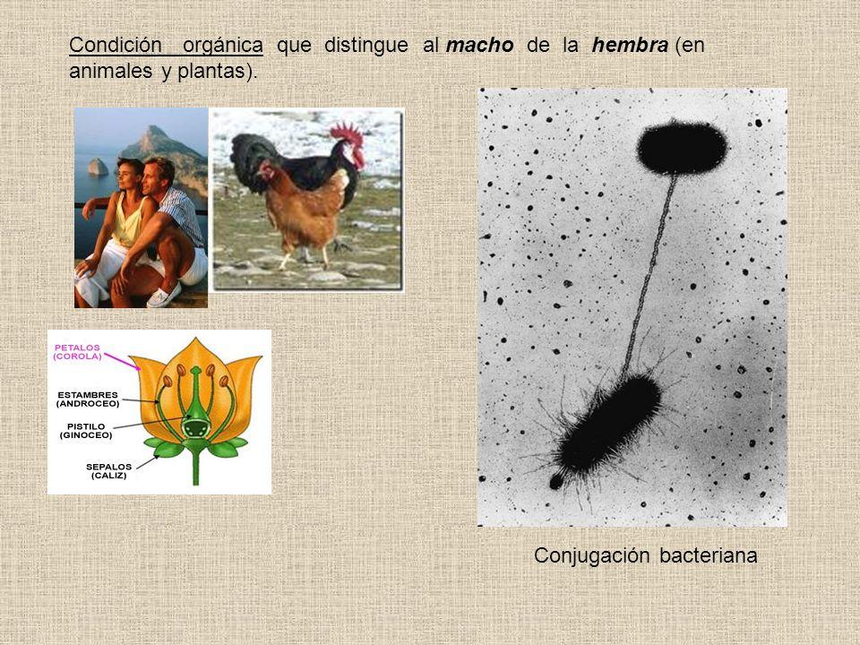 Condición orgánica que distingue al macho de la hembra (en animales y plantas).