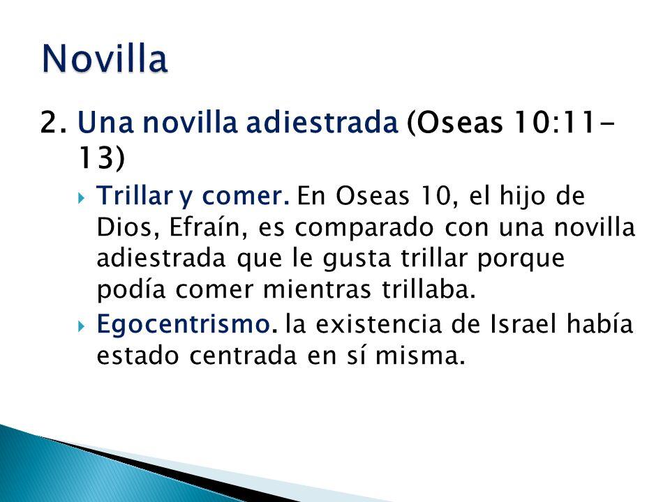 Novilla 2. Una novilla adiestrada (Oseas 10:11- 13)