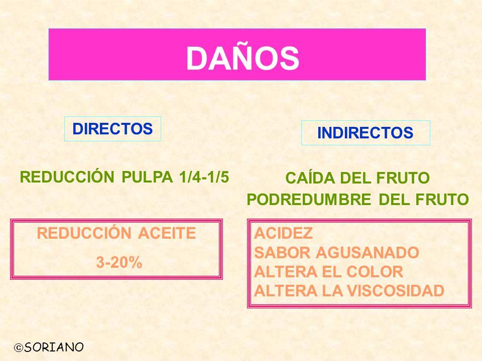 DAÑOS DIRECTOS INDIRECTOS REDUCCIÓN PULPA 1/4-1/5 CAÍDA DEL FRUTO