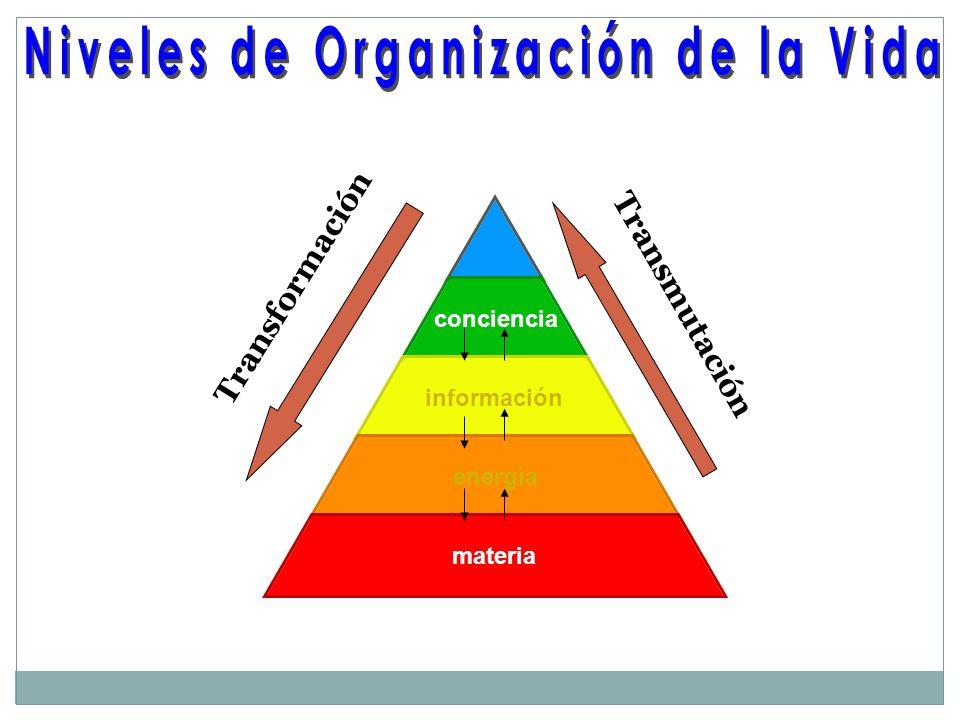 Niveles de Organización de la Vida