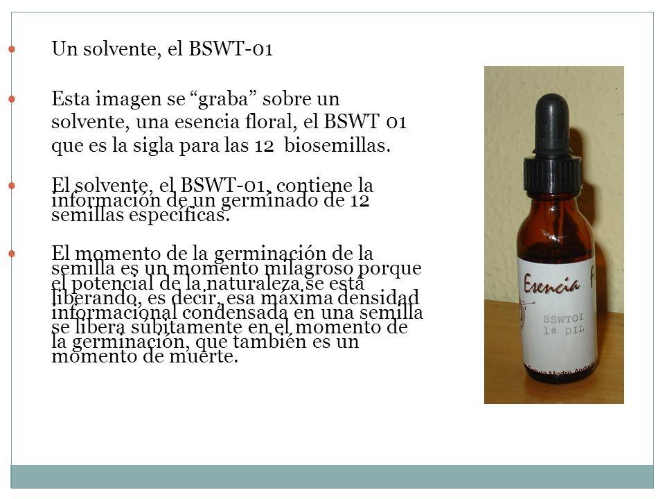 Un solvente, el BSWT-01Esta imagen se graba sobre un solvente, una esencia floral, el BSWT 01 que es la sigla para las 12 biosemillas.