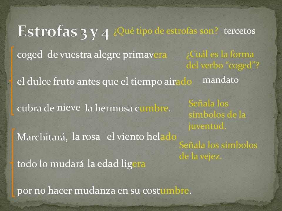 Estrofas 3 y 4 ¿Qué tipo de estrofas son tercetos.