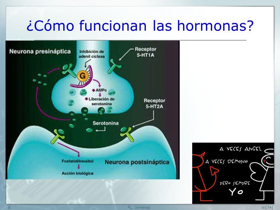 ¿Cómo funcionan las hormonas