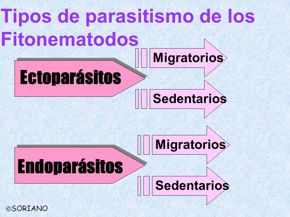 Tipos de parasitismo de los Fitonematodos