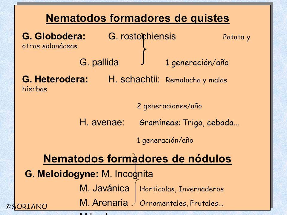 Nematodos formadores de quistes Nematodos formadores de nódulos