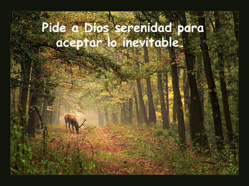 Pide a Dios serenidad para aceptar lo inevitable.