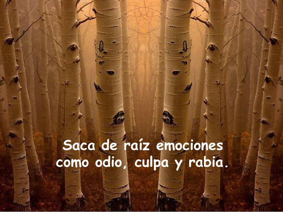 Saca de raíz emociones como odio, culpa y rabia.