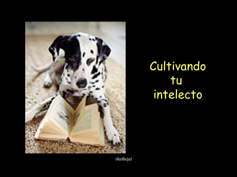 Cultivando tu intelecto ¡Refleja!