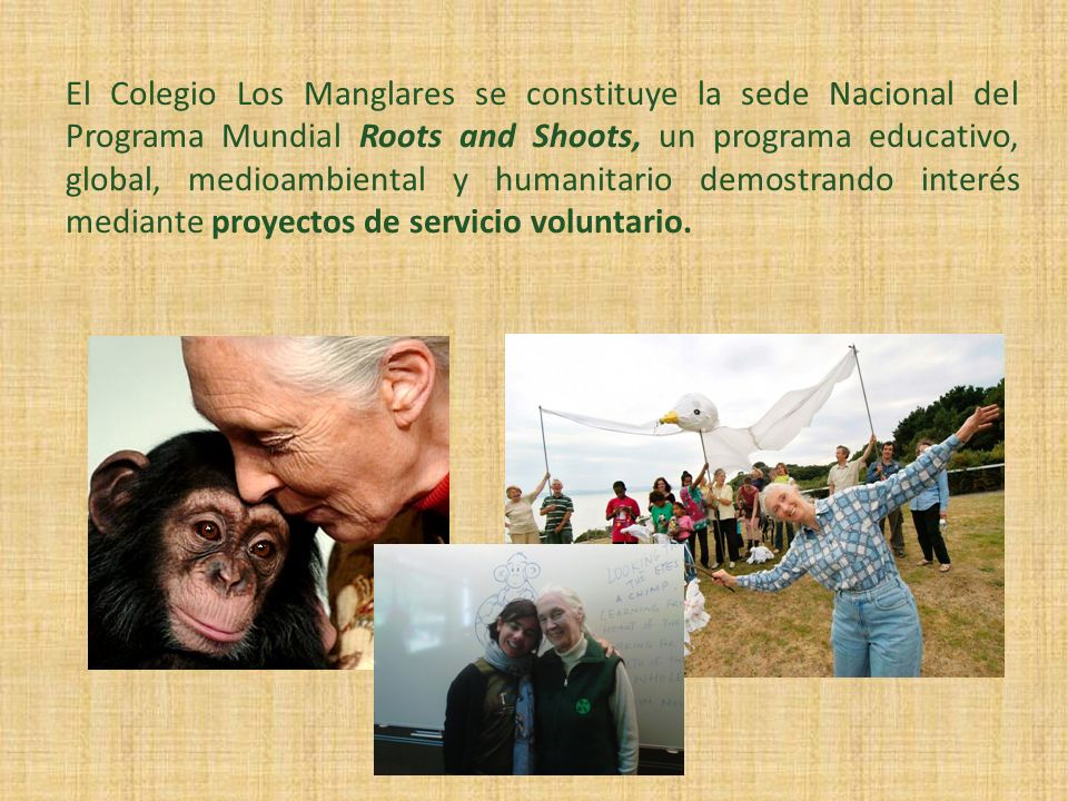El Colegio Los Manglares se constituye la sede Nacional del Programa Mundial Roots and Shoots, un programa educativo, global, medioambiental y humanitario demostrando interés mediante proyectos de servicio voluntario.