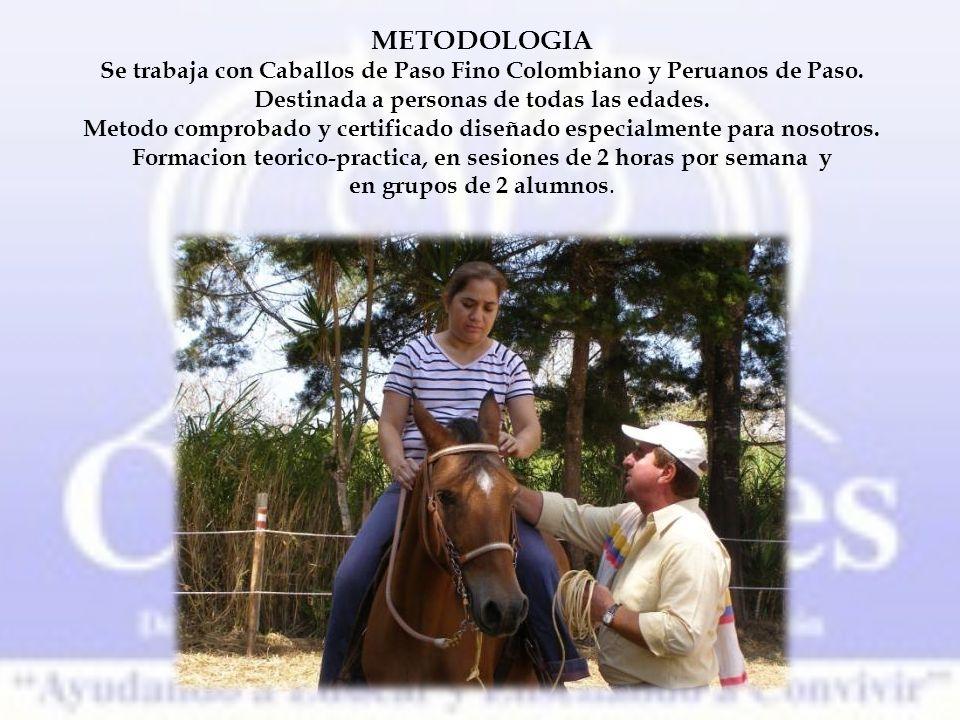 METODOLOGIA Se trabaja con Caballos de Paso Fino Colombiano y Peruanos de Paso.