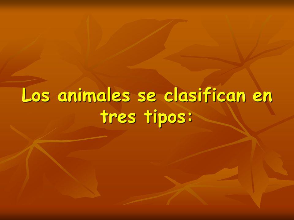 Los animales se clasifican en tres tipos: