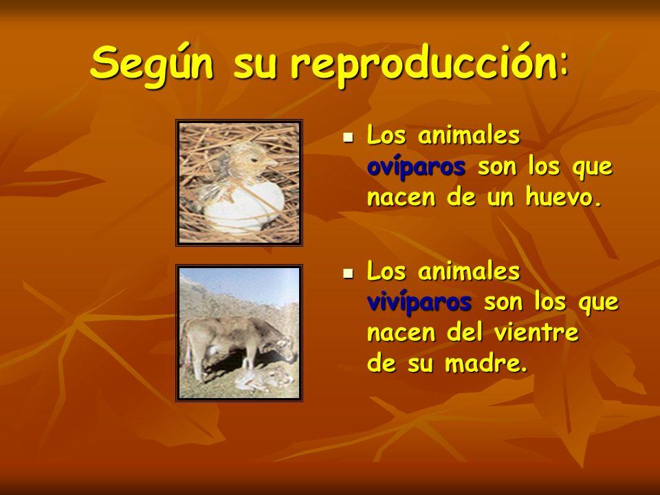 Según su reproducción: