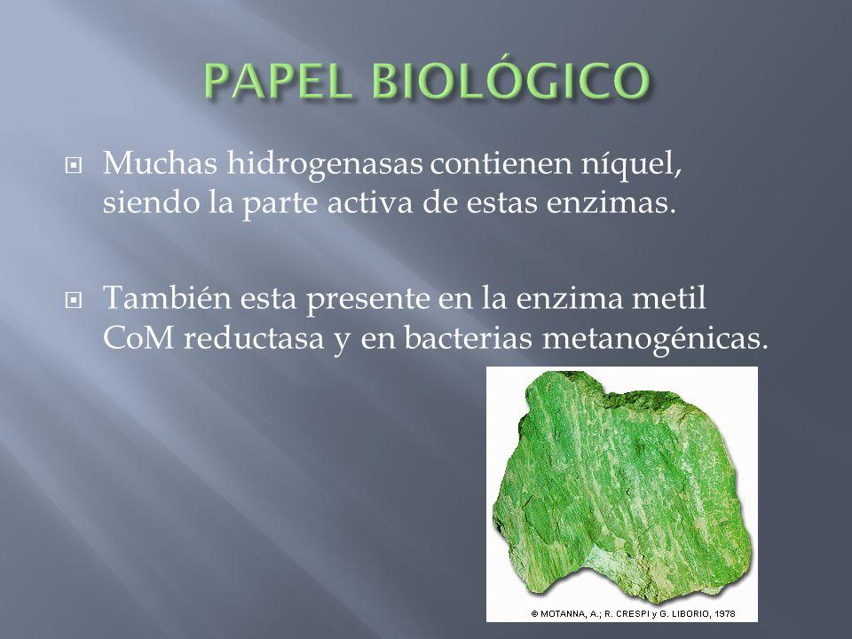 PAPEL BIOLÓGICO Muchas hidrogenasas contienen níquel, siendo la parte activa de estas enzimas.