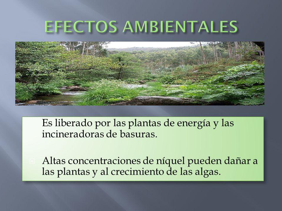 EFECTOS AMBIENTALES Es liberado por las plantas de energía y las incineradoras de basuras.