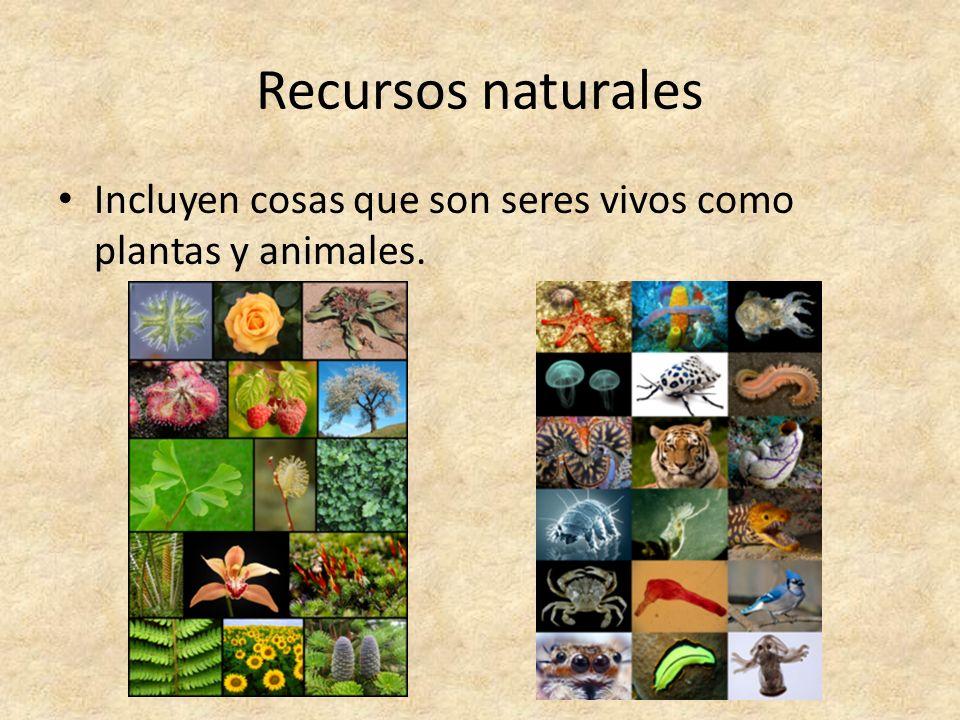 Recursos naturales Incluyen cosas que son seres vivos como plantas y animales.