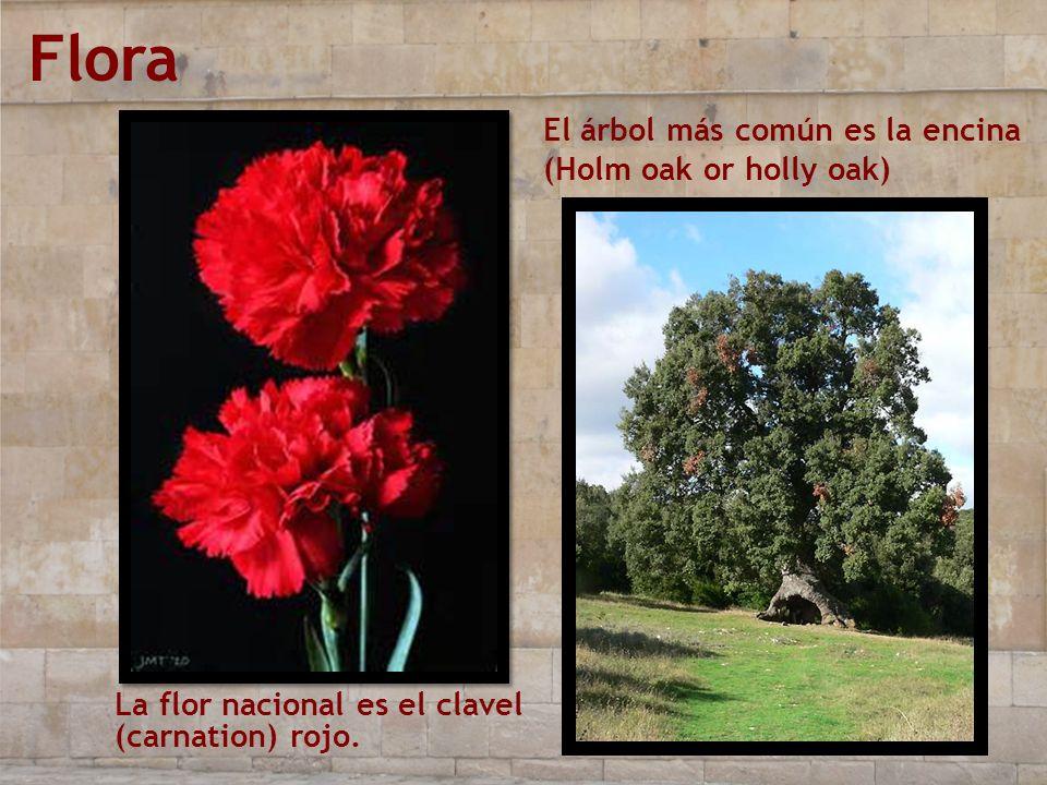 Flora El árbol más común es la encina (Holm oak or holly oak)