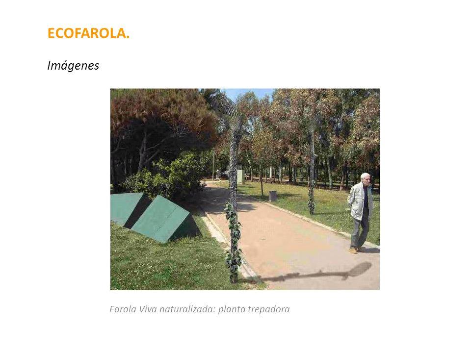 ECOFAROLA. Imágenes Farola Viva naturalizada: planta trepadora