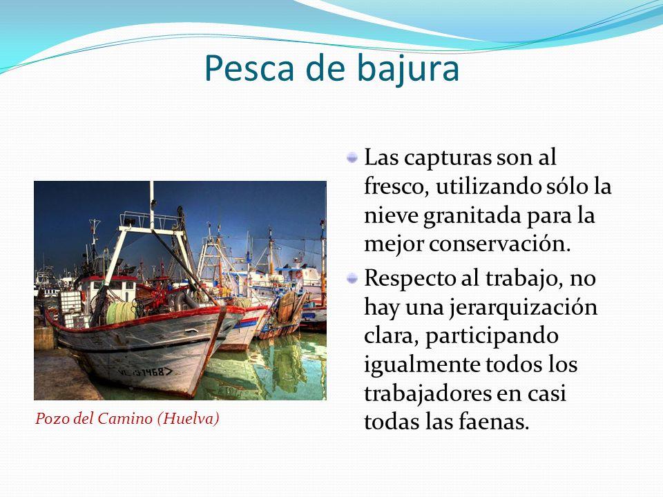 Pesca de bajura Las capturas son al fresco, utilizando sólo la nieve granitada para la mejor conservación.