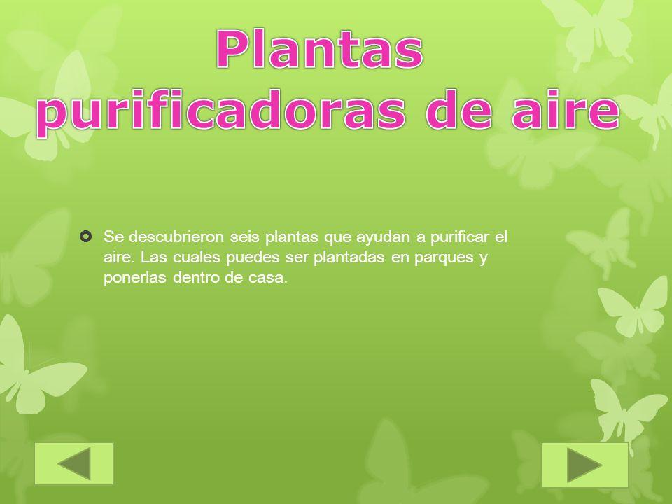 Plantas purificadoras de aire