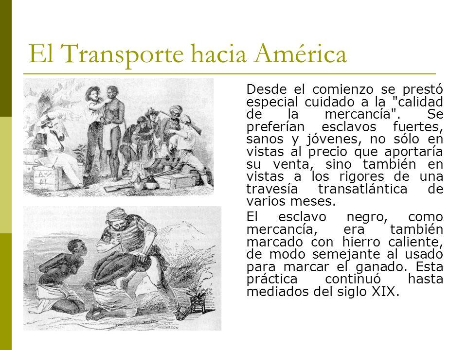 El Transporte hacia América