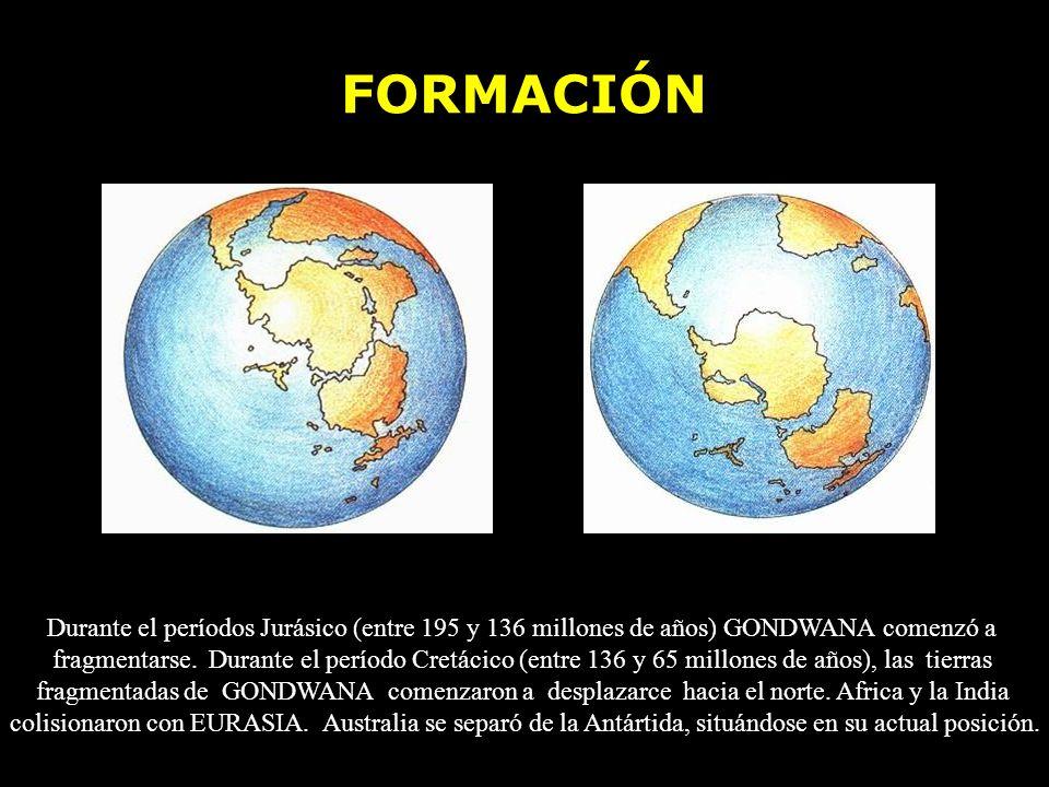 FORMACIÓN Durante el períodos Jurásico (entre 195 y 136 millones de años) GONDWANA comenzó a.
