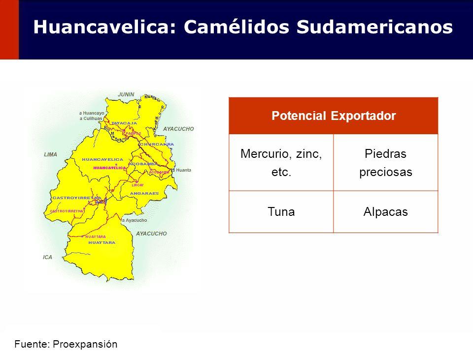 Huancavelica: Camélidos Sudamericanos