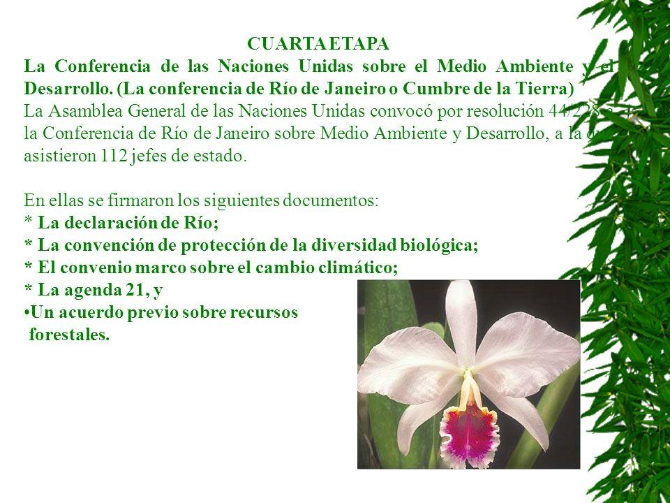 CUARTA ETAPA La Conferencia de las Naciones Unidas sobre el Medio Ambiente y el Desarrollo. (La conferencia de Río de Janeiro o Cumbre de la Tierra)