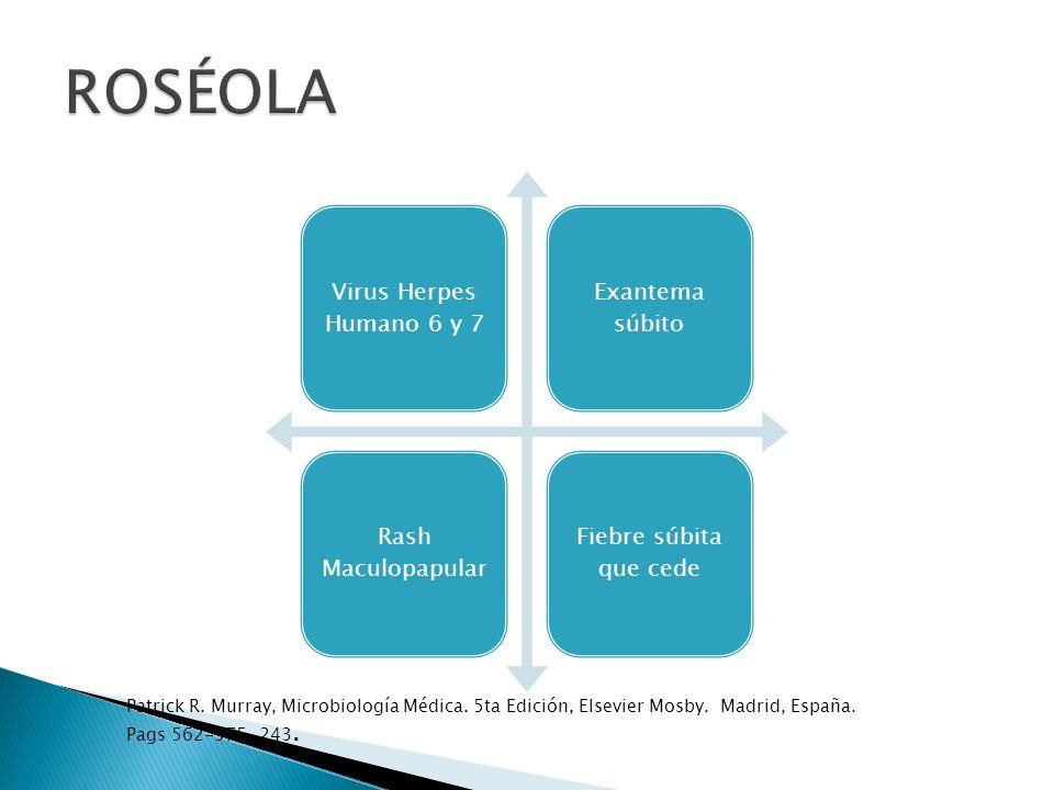 ROSÉOLA Virus Herpes Humano 6 y 7. Exantema súbito. Rash Maculopapular. Fiebre súbita que cede.