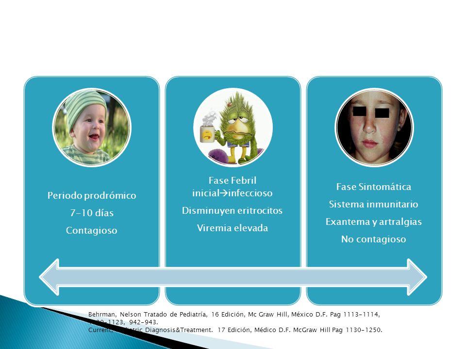 Periodo prodrómico Contagioso. 7-10 días. Fase Febril inicialinfeccioso. Disminuyen eritrocitos.