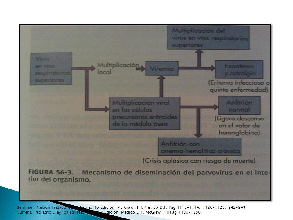 Behrman, Nelson Tratado de Pediatría, 16 Edición, Mc Graw Hill, México D.F. Pag 1113-1114, 1120-1123, 942-943.