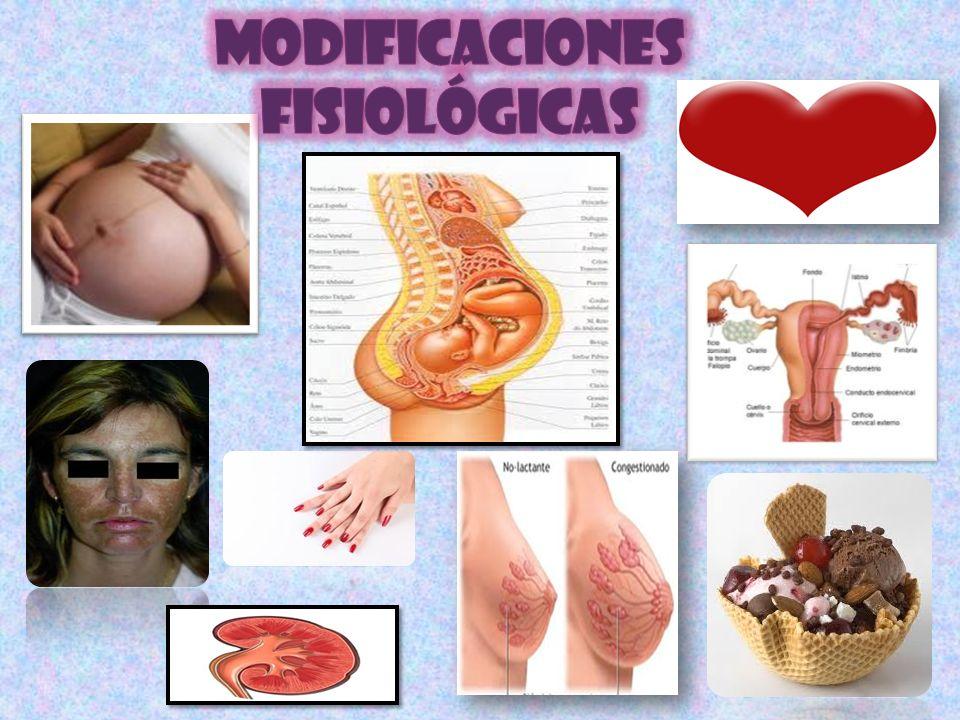 MODIFICACIONES FISIOLÓGICAS