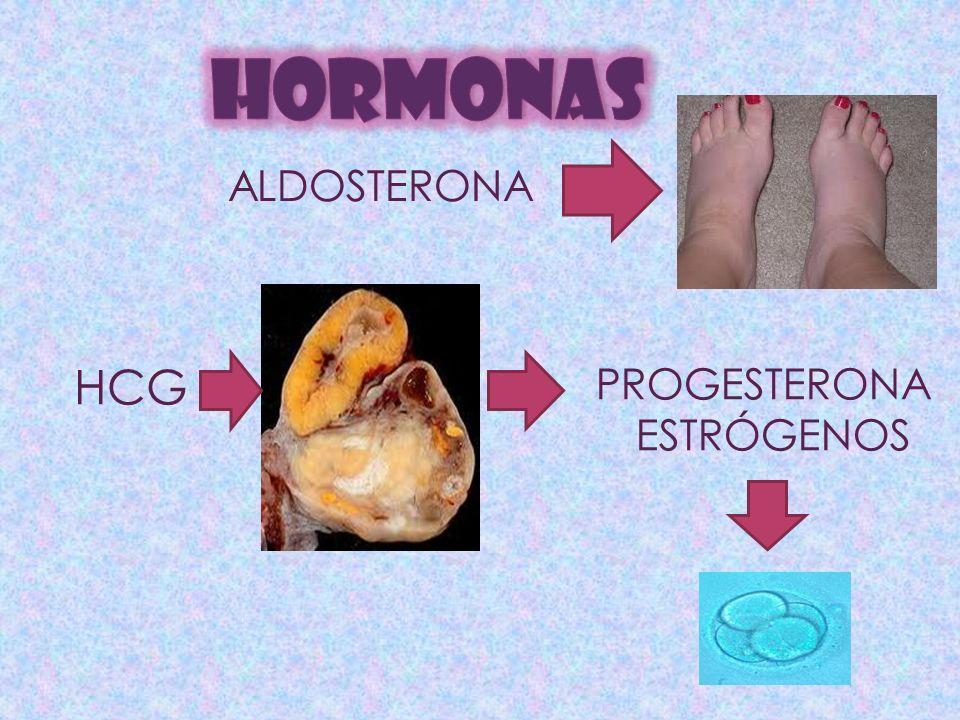 HORMONAS ALDOSTERONA HCG PROGESTERONA ESTRÓGENOS