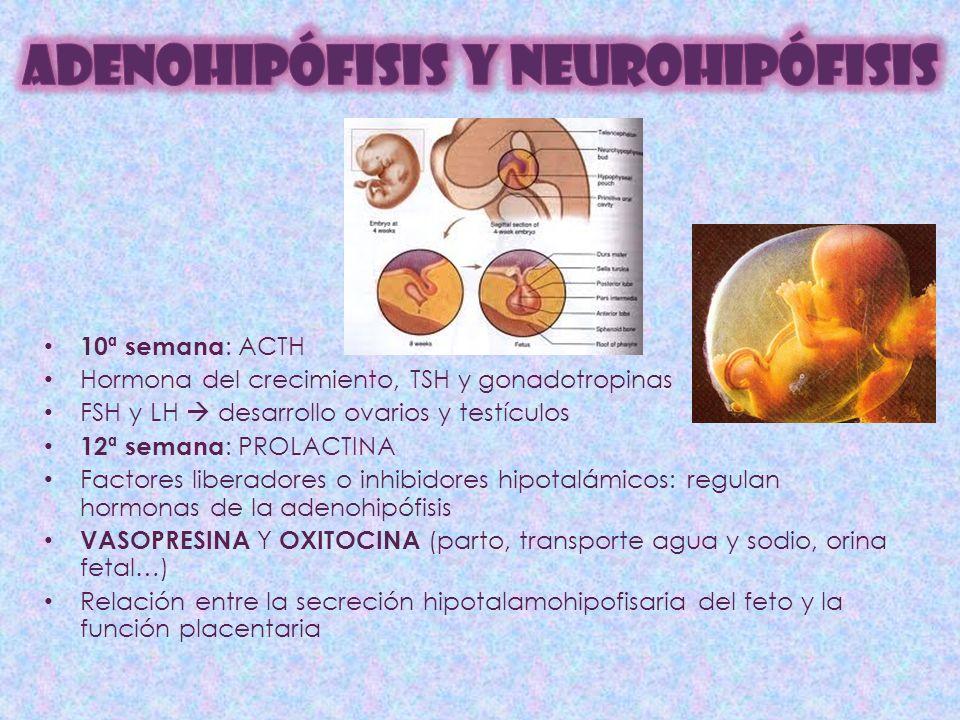 ADENOHIPÓFISIS Y NEUROHIPÓFISIS