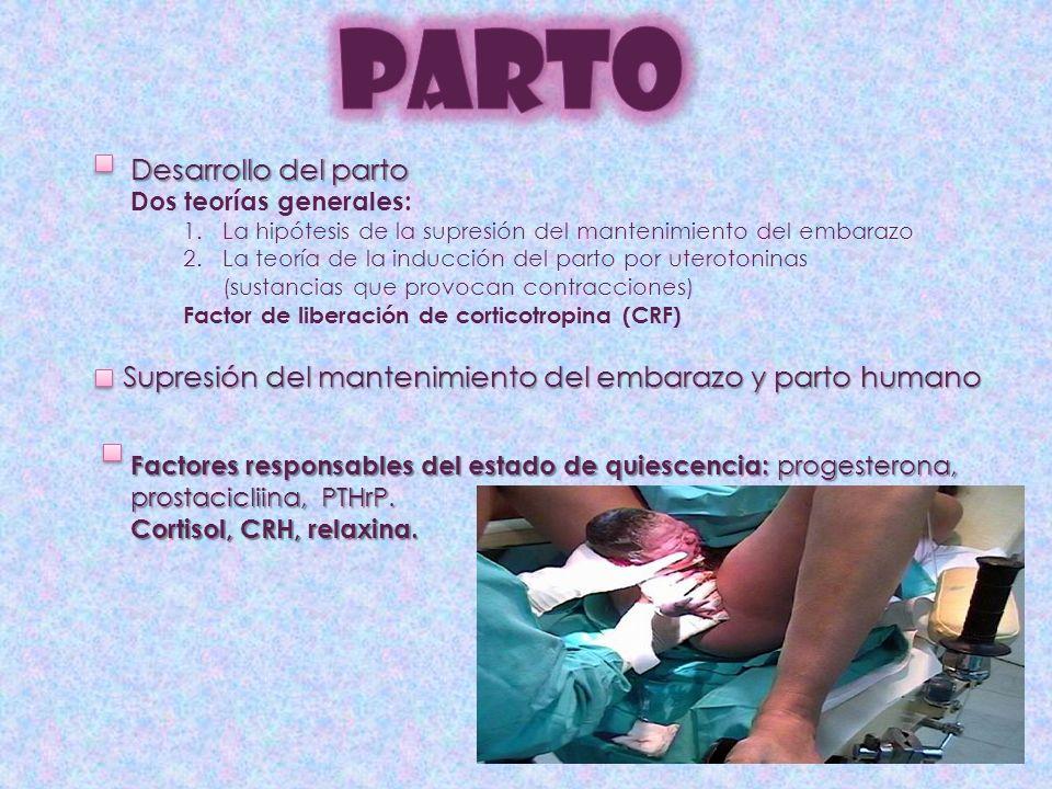 PARTO Desarrollo del parto