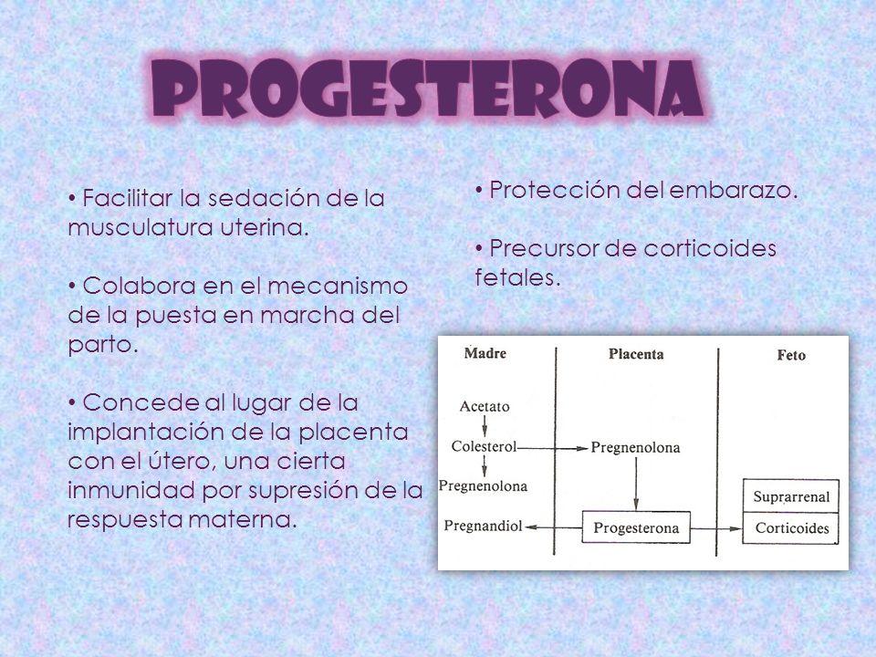 PROGESTERONA Facilitar la sedación de la musculatura uterina.